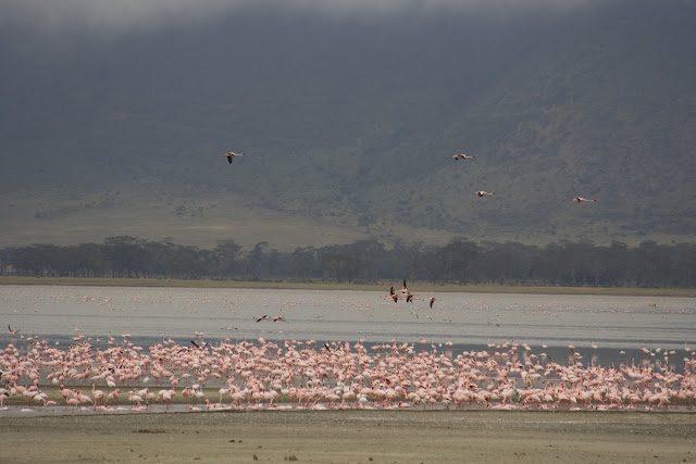 Tanzania-Norongoro