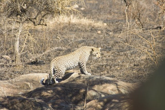 Tanzania-Serengueti