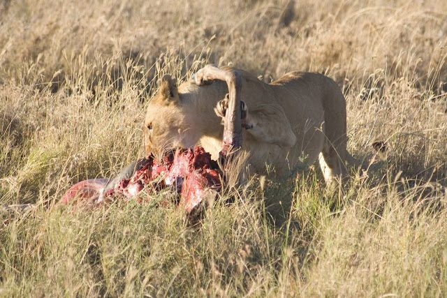 Tanzania-SerenguetiLeona