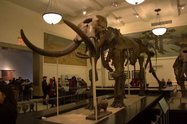 NuevaYork-MuseoHistoriaNatural