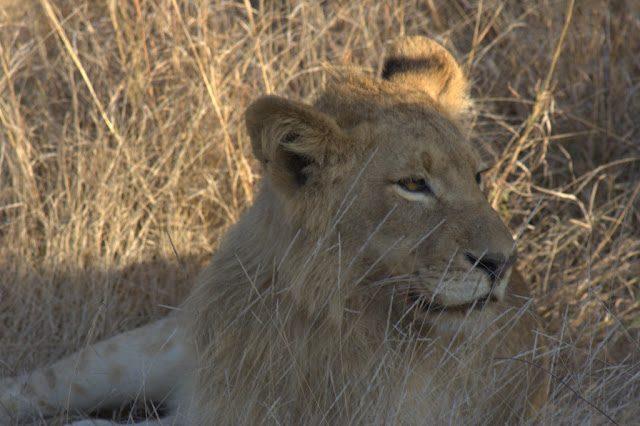 Kruger-Leon