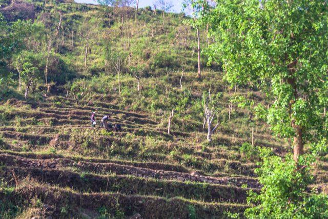 Nepal Campos Cultivo