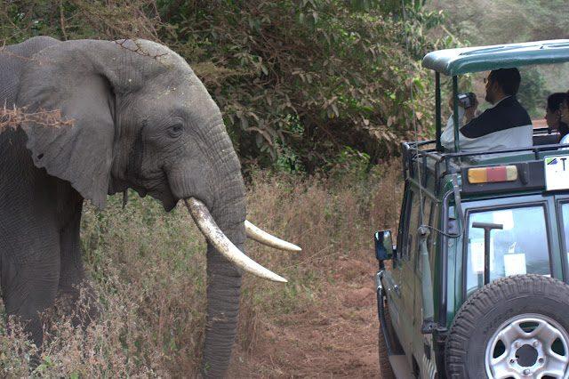 Tanzania-SafariElefante
