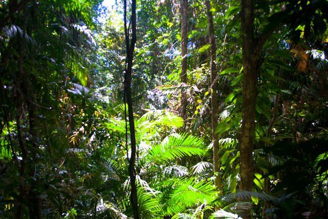 Australia-Daintree-Selva