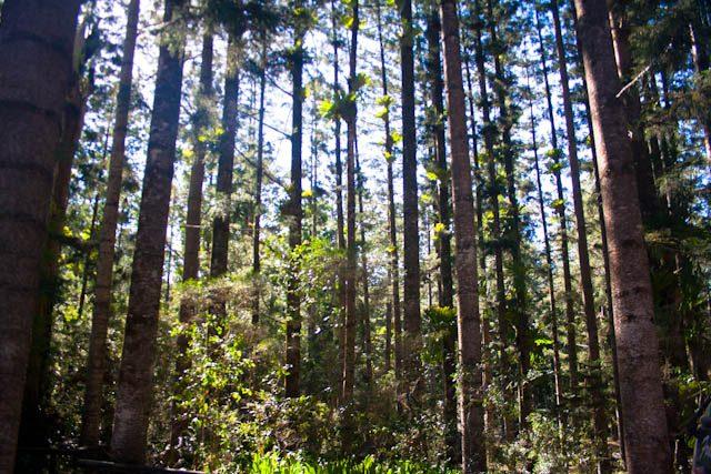 Australia-Fraser Island Bosque Pluvial