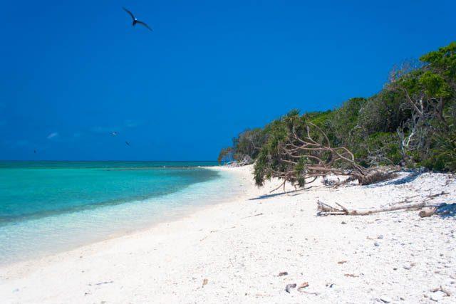Australia-Lady Musgrave Island Playa