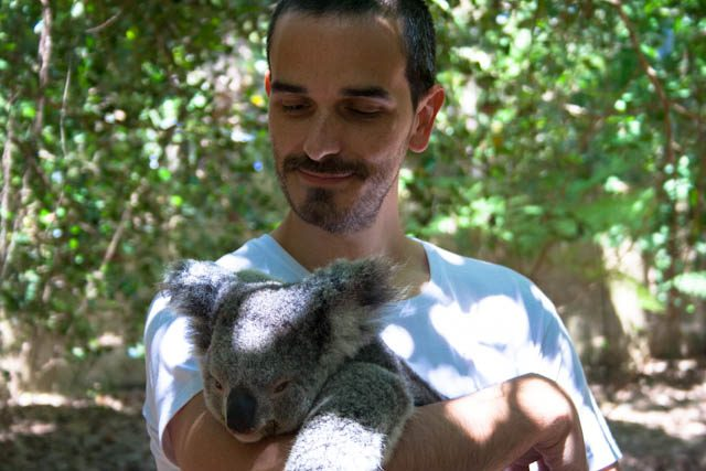 Australia-MagneticI sland Mirando Koala