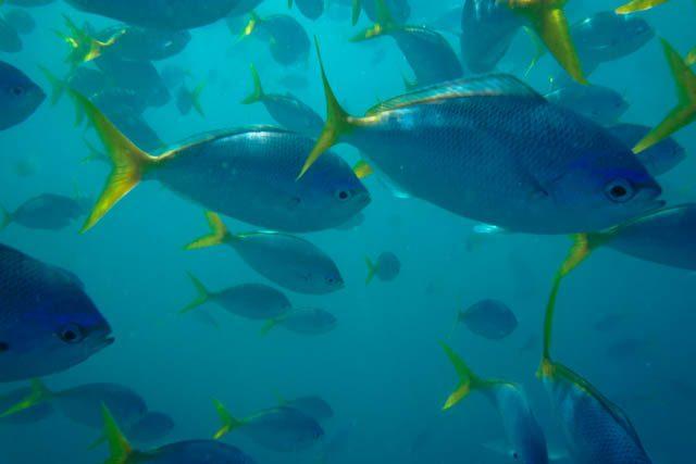 Australia-Whitsunday Island Snorkel Peces