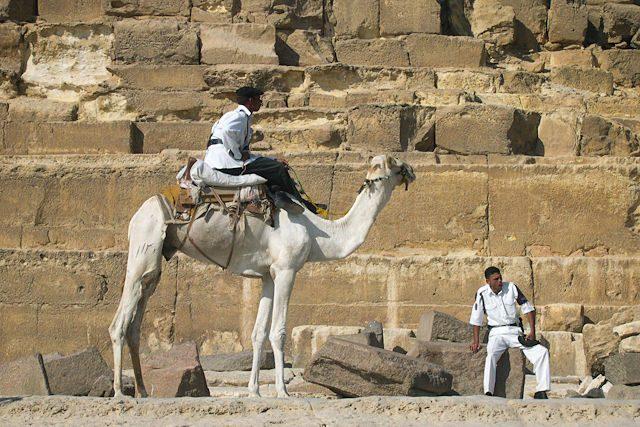 Egipto-Giza Camellos Policia Turística