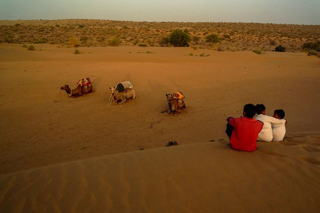 Thar-India Camellos