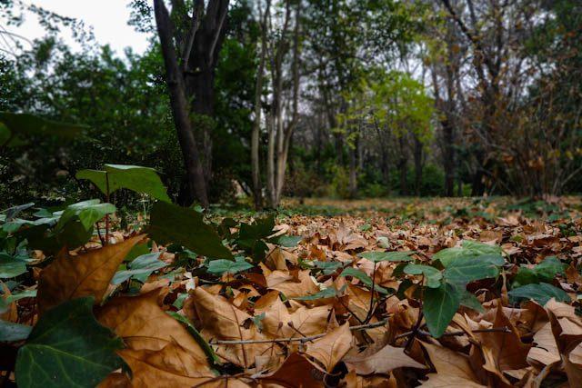 Madrid Jardines Campo Moro Hojas
