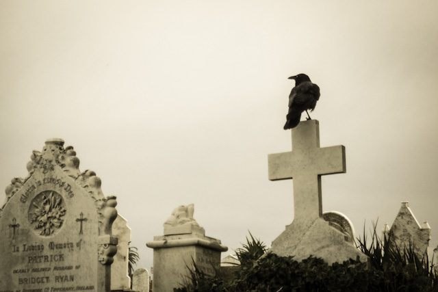 Australia Sidney Cementerio Waverley Cuervo