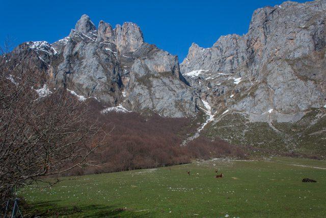 Picos de Europa Caballos Fuente Dé