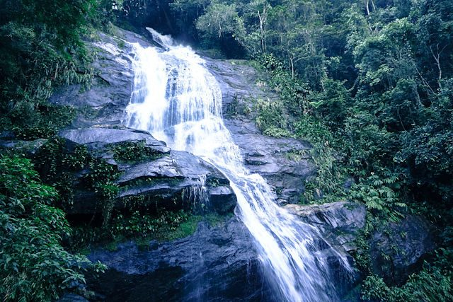 Rio de Janeiro Tijuca Floresta