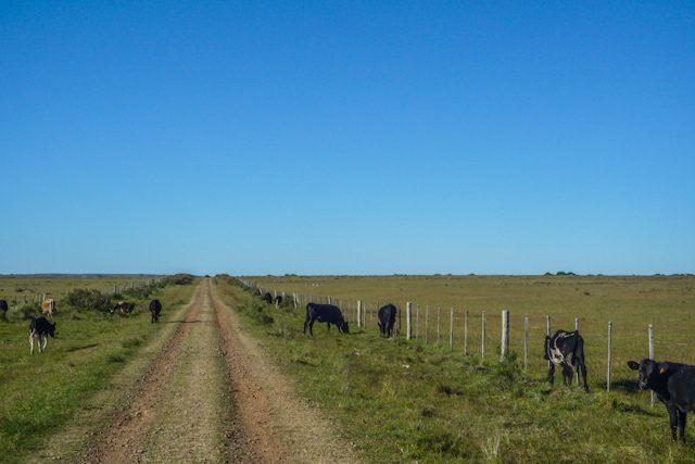 Uruguay Tacuarembo Valle Eden Vacas Camino