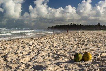 Maceio Praia Do Frances Cocos