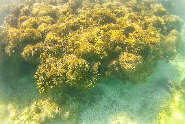 Maragogi Barrera Coral