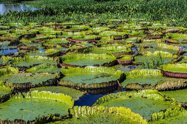 Alter Do Chao Victoria Regiais Canal Do Jari Mae Natureza