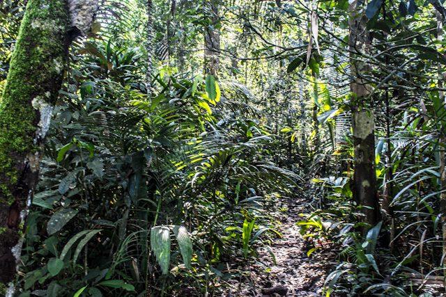 Hotel Selva Amazon Tupana Lodge Camino Selva