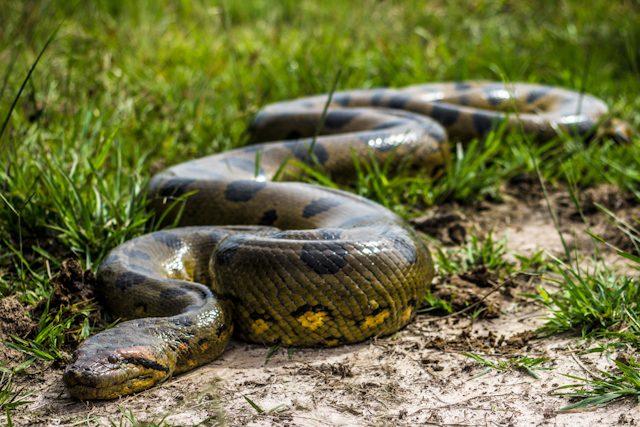 Los Llanos Rancho Grande Anaconda Completa