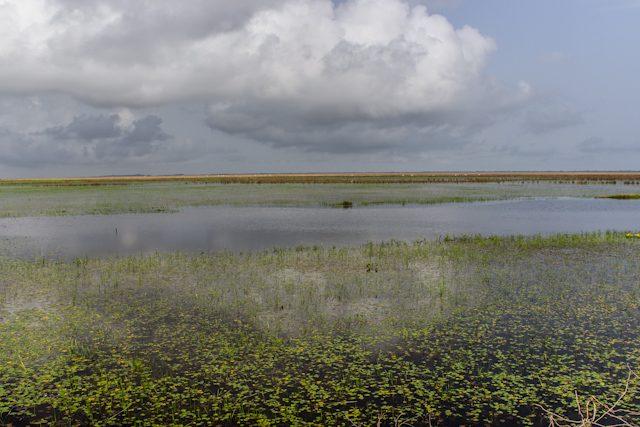 Los Llanos Rancho Grande Paisaje Inundado