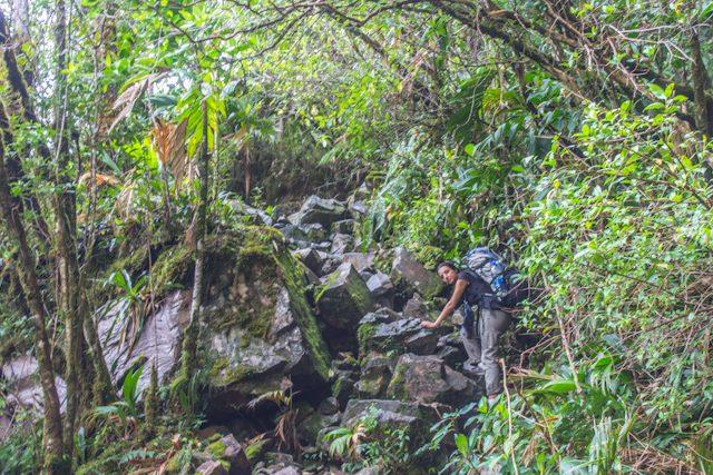 Venezuela Roraima Subiendo Tepuy Selva