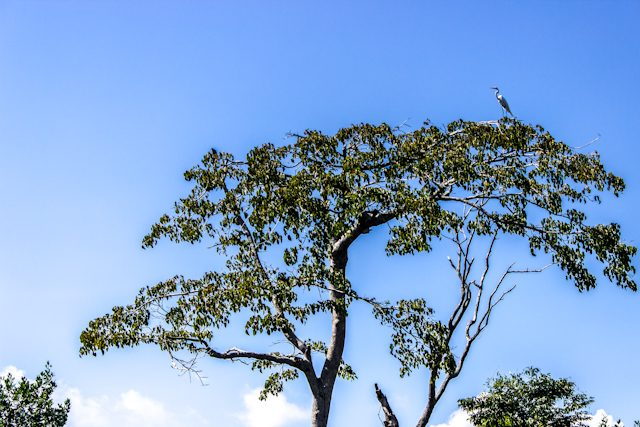 Guamanchi Expeditions Rio Catatumbo Garza Arbol