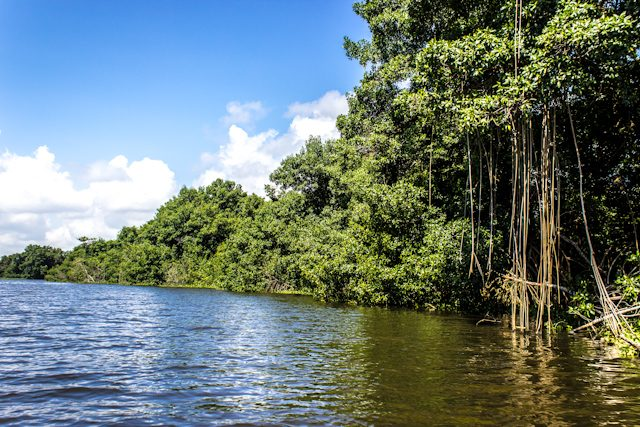 Guamanchi Expeditions Rio Catatumbo Manglar