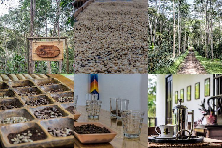 Colombia Santander Mesa De Los Santos Coffee Tour Mosaico