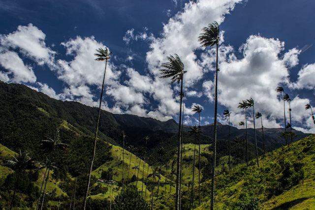 Salento Valle de Cocora Palmas De Cera