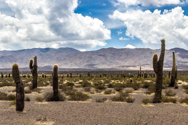 Salta Cachi Parque Nacional los Cardones Turismo La Posada