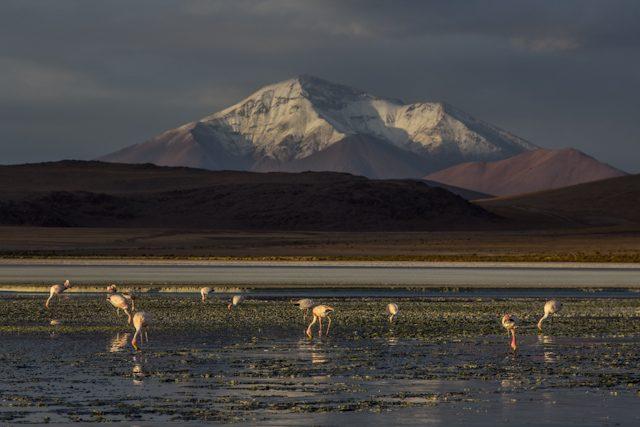 Uyuni Lagunas Altiplanicas Hedionda Flamencos Volcan