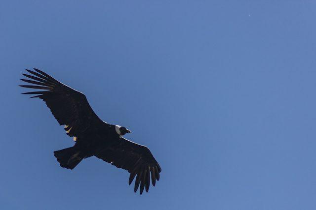 Cordoba Parque Nacional Quebrada del Condorito Condor