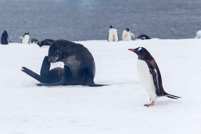 Antartida Foca Leon Marino Pinguino