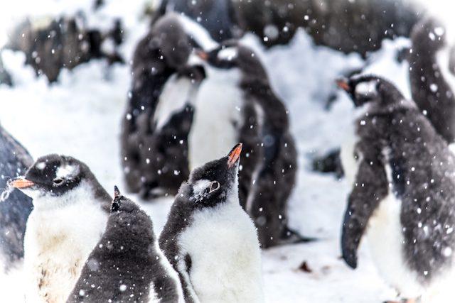 Antartida Pinguino Nieve