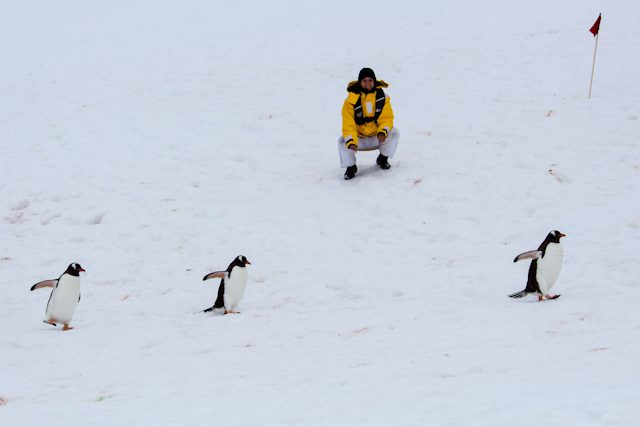 Antartida Sara Pinguinos