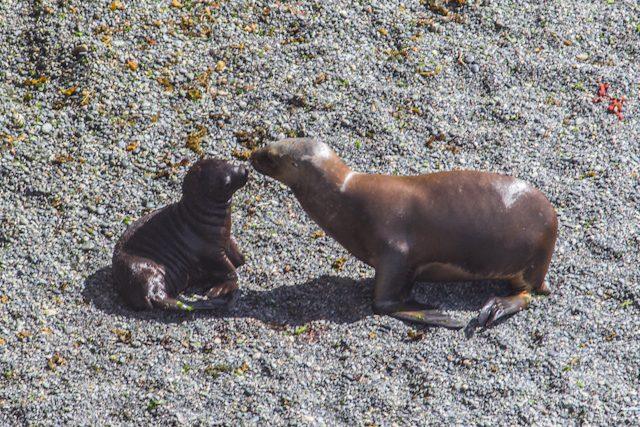 Argentina Puerto Madryn Lobos Marinos Golfo Nuevo