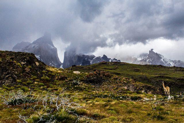 Los Cuernos del Paine asomaron entre las nubes lo justo para que pudiéramos verlos con los guanacos