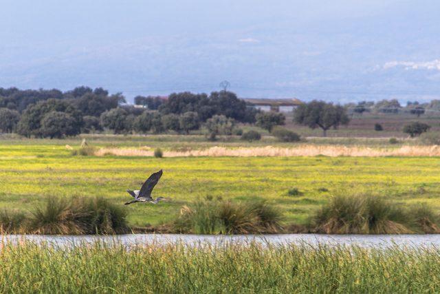 Extremadura Parque Ornitologico Arrocampo Garza