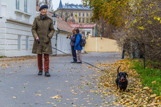 Praga Otono Kampa Paseo