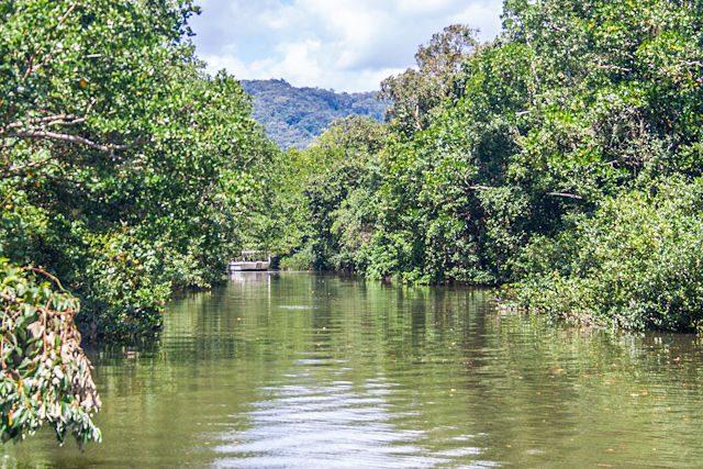 Australia Daintree Forest