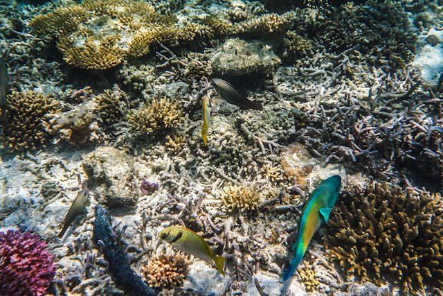 Australia Lady Musgrave Island Arrecifes Colores
