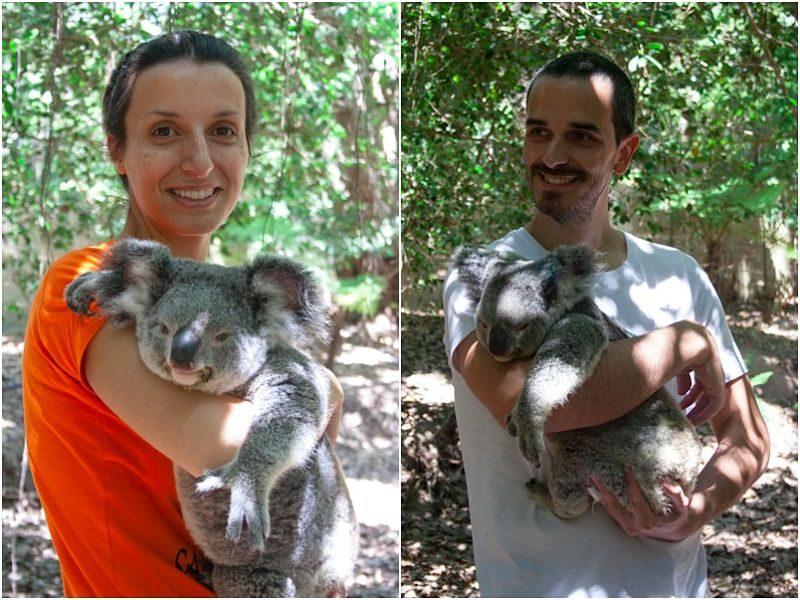 Australia Magnetic Island Abrazo Koala
