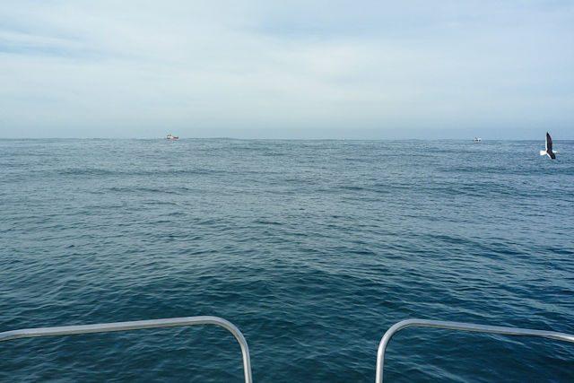 Sudafrica Gansbaai Alta Mar Borda Barco Gran Tiburon Blanco