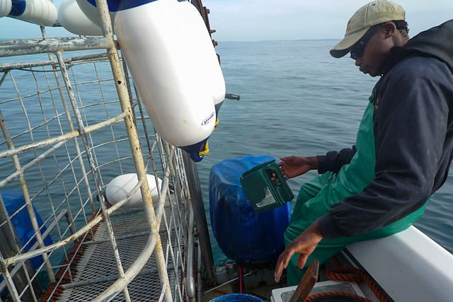 Sudafrica Gansbaai Alta Mar Tripulacion Barco Gran Tiburon Blanco