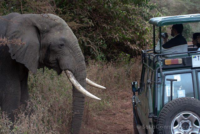 Tanzania Lago Manyara Elefante Coche