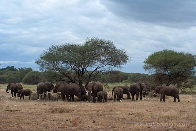 Tanzania Lago Manyara Manada Elefantes
