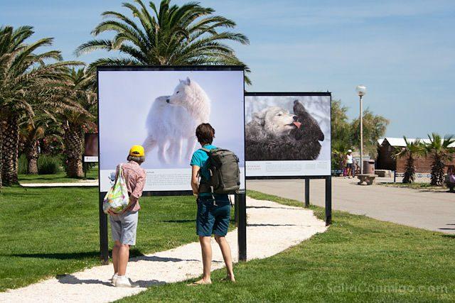 Argeles-sur-mer playa Enfants de la mer lobos