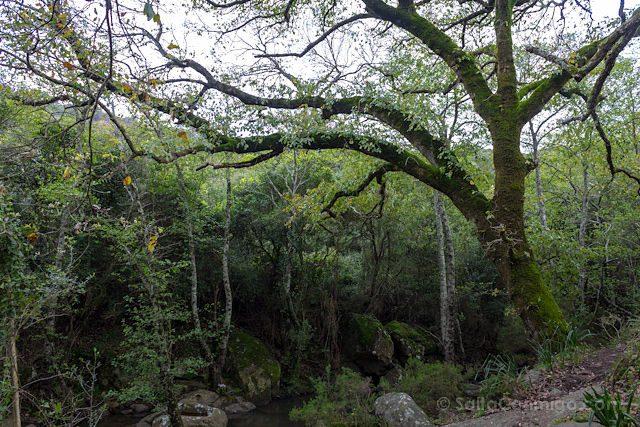 Cadiz Tarifa Parque Natural de los Alcornocales Laurisilva