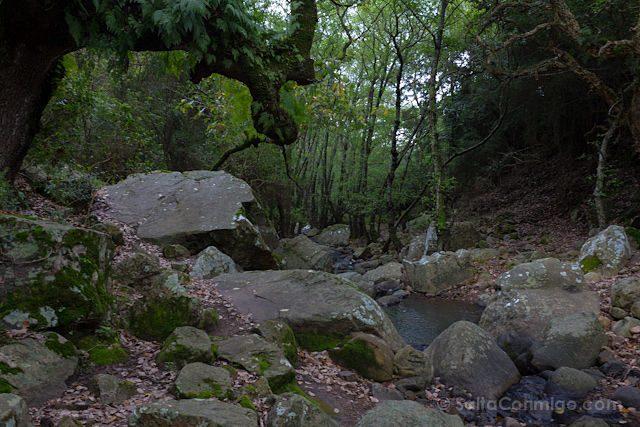 Cadiz Tarifa Parque Natural Alcornocales Laurisilva
